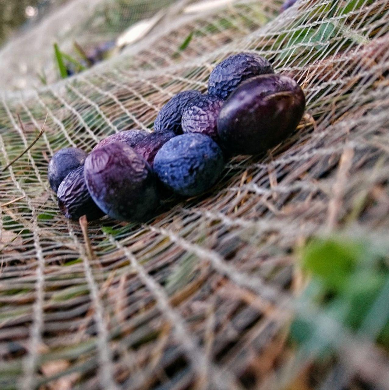 Olive del Garda_rete